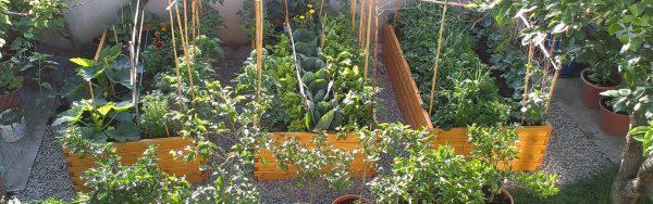 Visoke grede Plantera - Vrtnarjenje za vsakogar!