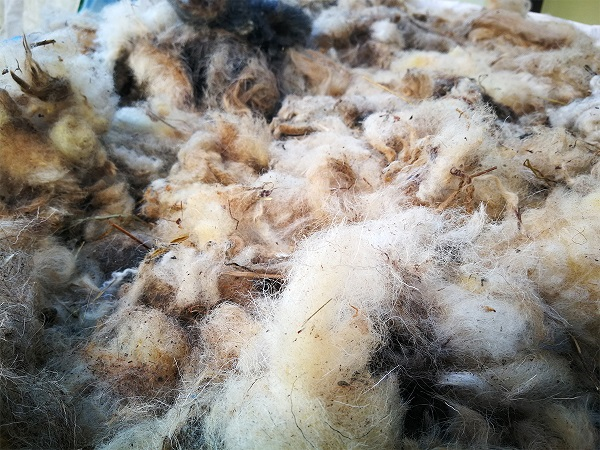 Neoprana ovčja volna za visoko gredo